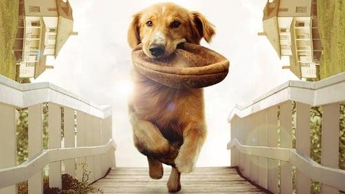一条狗的使命