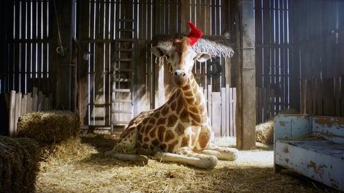My Giraffe