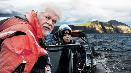 Whale Wars: Viking Shores