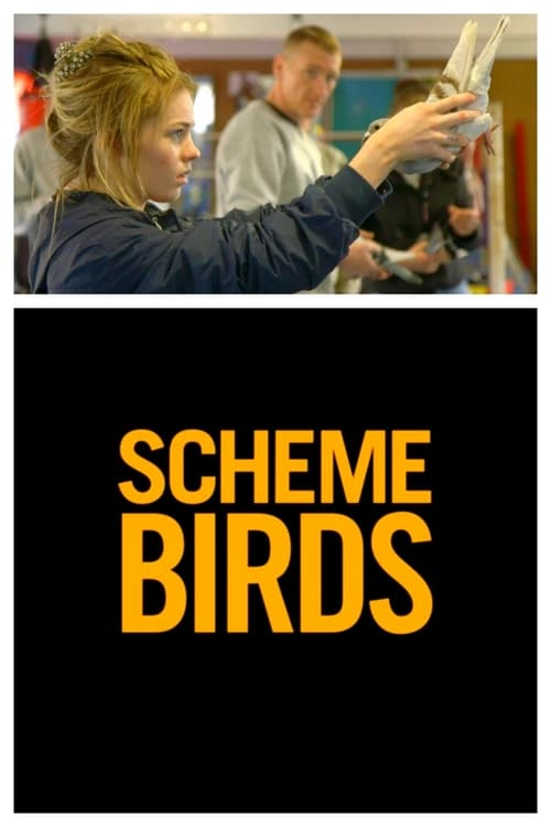 Largescale poster for Scheme Birds