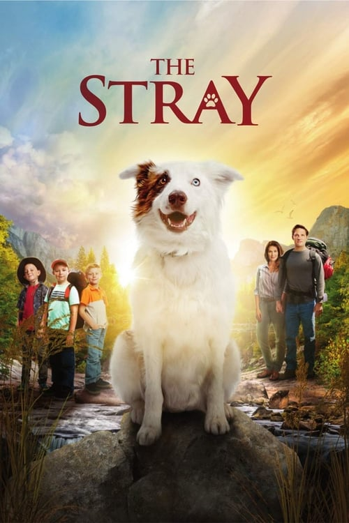 Poster for The Stray