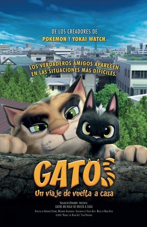 Imagen Gatos. Un viaje de vuelta a casa