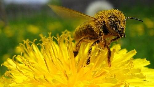 NOVA: Season 27 – Episode Tales from the Hive