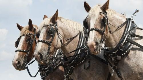 Nature: Season 18 – Episode Horses