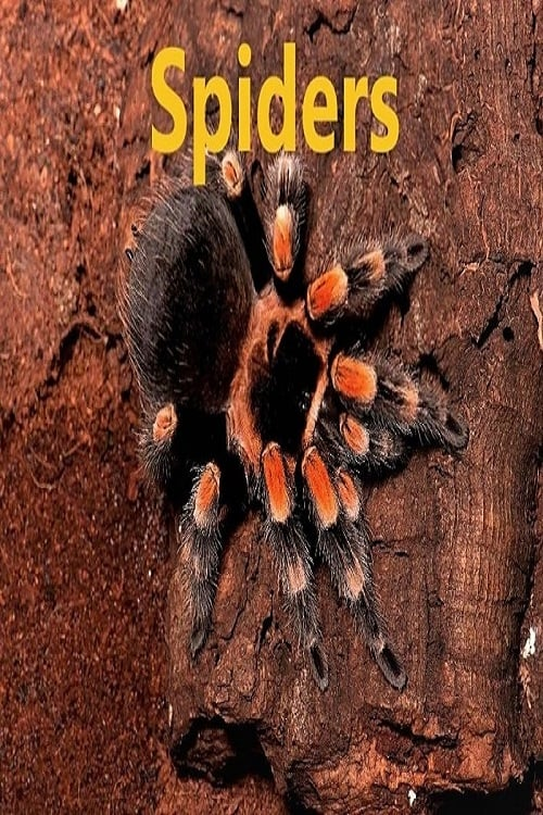 Spiders (2018)