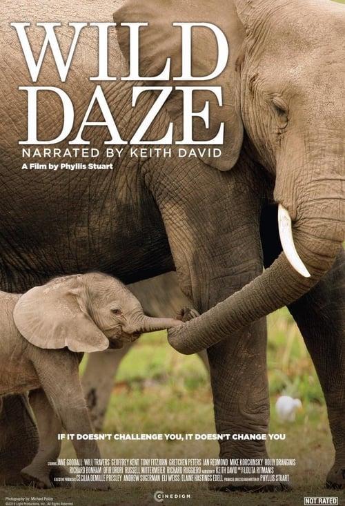 Wild Daze (2020)