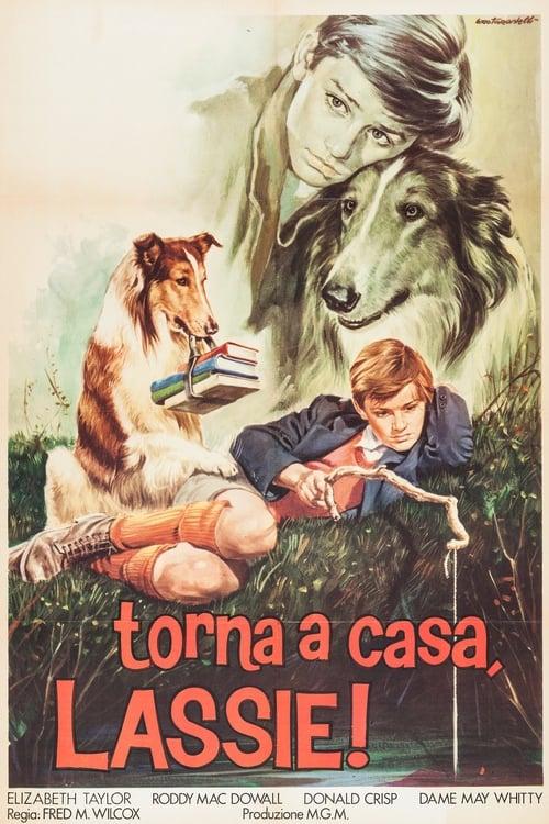 Torna a casa Lassie! (1943)