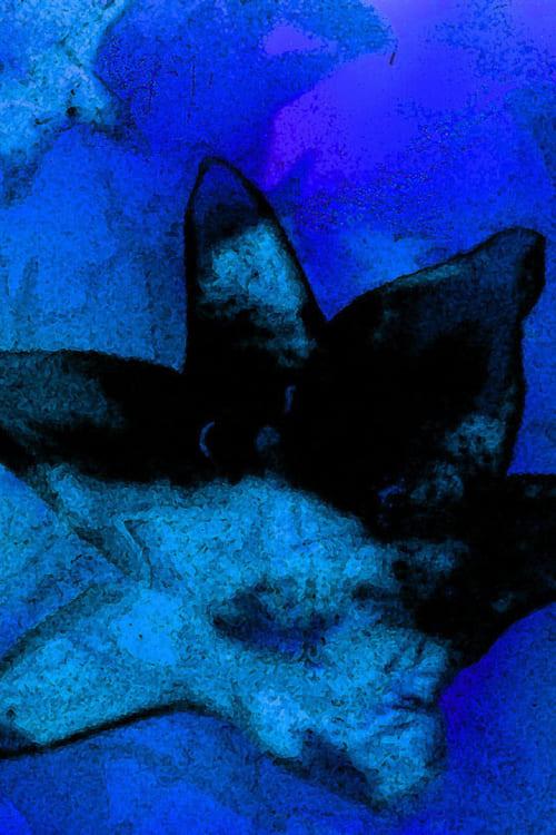 Ver pelicula Blue Monet Online