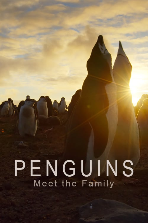 Penguins: Meet the Family