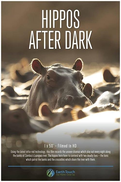 Hippos after Dark