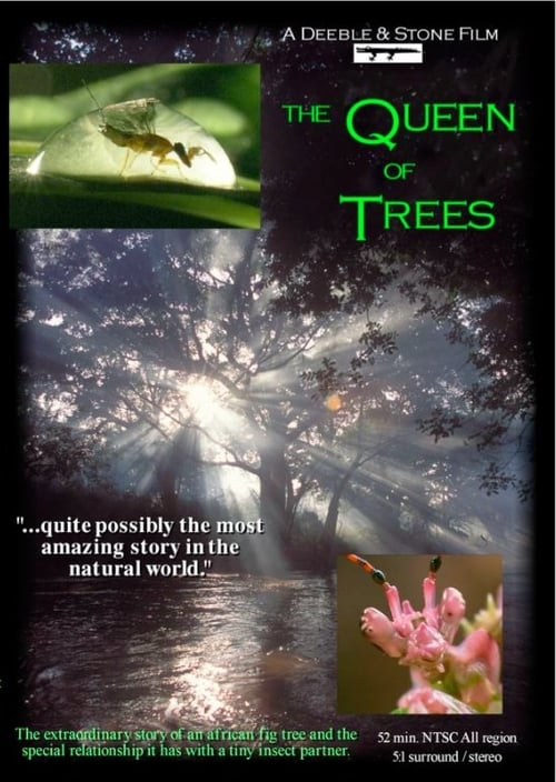 Descargar Película The Queen of Trees Gratis