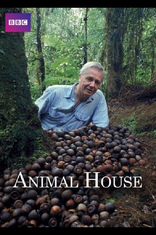 Animal House (2011)
