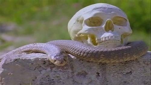 The Adventures of Sinbad: Season 1 – Episode Conundrum