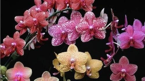 NOVA: Season 30 – Episode The Orchid Hunter