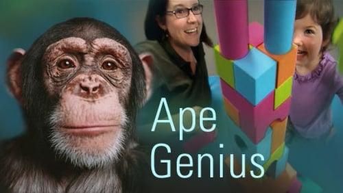 NOVA: Season 35 – Episode Ape Genius