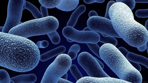 Bacterial World (2016)