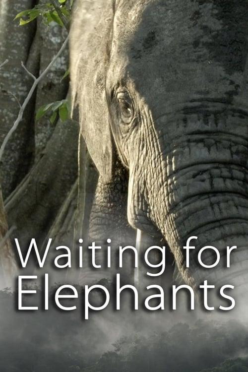 Waiting for Elephants ( Waiting for Elephants )