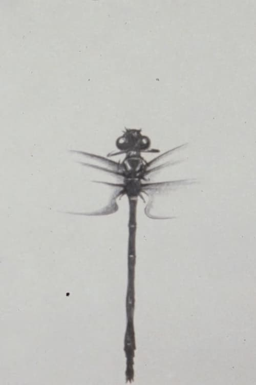 Dragonfly (1988)