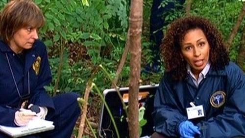 Law & Order: Special Victims Unit: Season 9 – Episode Signature