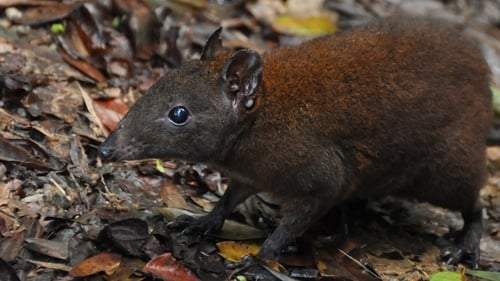 NOVA: Season 40 – Episode Australia's First 4 Billion Years: Strange Creatures