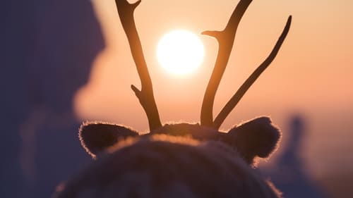 A Reindeer's Journey – 2018 : Full Movie