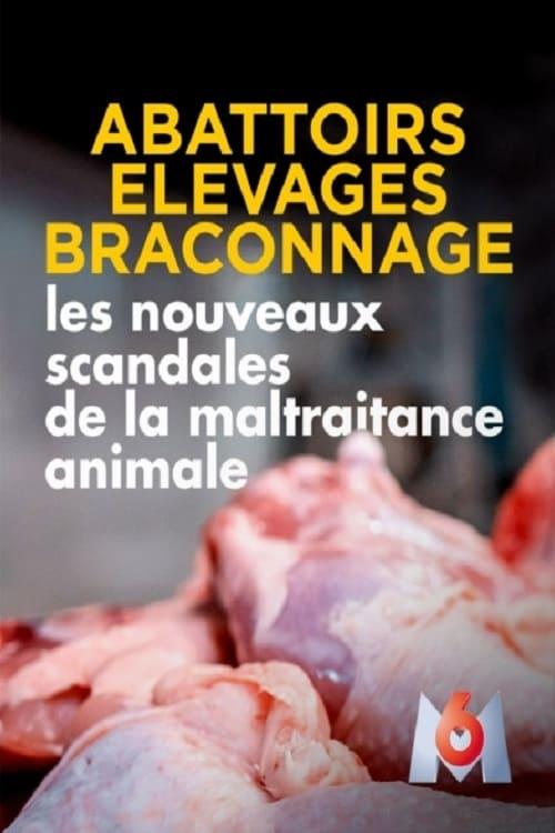 Abattoirs, élevages, braconnage, les nouveaux scandales de la maltraitance animale