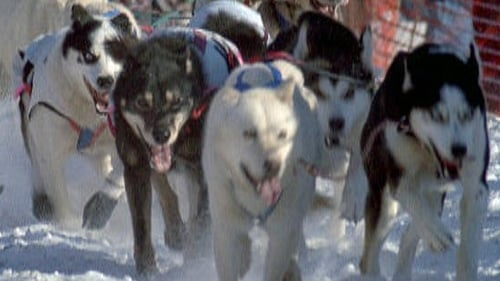 Nature: Season 18 – Episode Sled Dogs: An Alaskan Epic