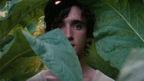 Happy as Lazzaro Full Movie Online