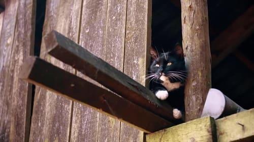 Movie Stream Le monde secret des chats