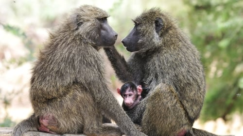 Nature: Season 18 – Episode Inside the Animal Mind Part Three: Animal Consciousness