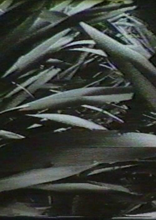 Sensation '77: Mimicry (1977)