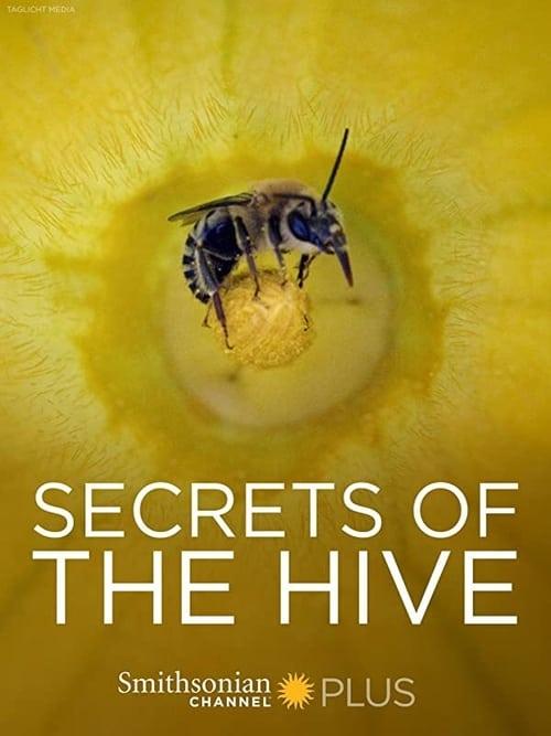 Secrets of the Hive ( Secrets of the Hive )