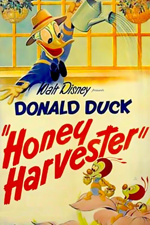 Filme Der Honigsammler Streaming