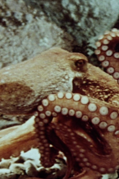 The Love Life of an Octopus (1967)