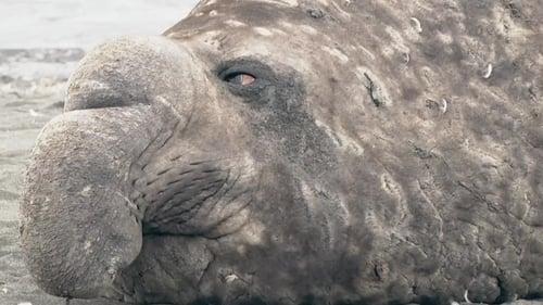 Poster della serie 72 Dangerous Animals: Latin America