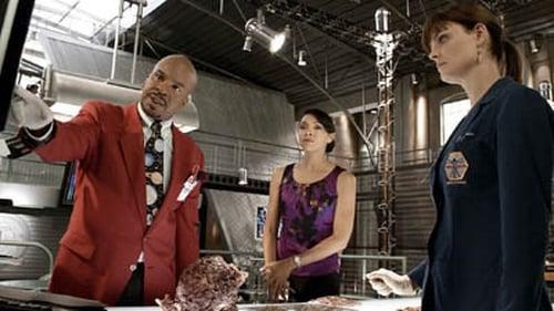 Assistir Bones S06E04 – 6×04 – Dublado