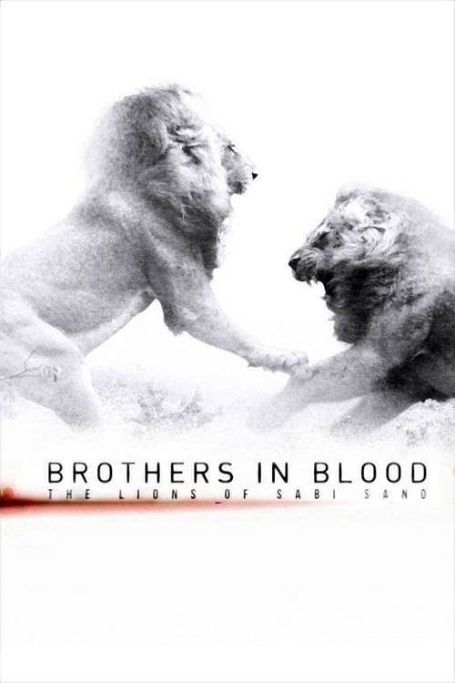 Image Brothers in Blood: The Lions of Sabi Sand