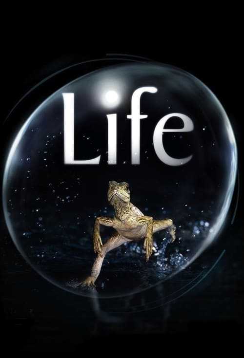 Life-Azwaad Movie Database