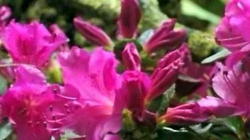 NOVA: Season 34 – Episode First Flower