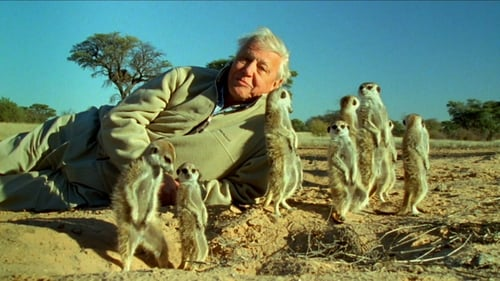 Nature 2013 720p Extended: Season 31 – Episode Attenborough's Life Stories: Part Two - Understanding the Natural World
