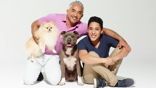 Cesar Millan's Dog Nation Season 1 Episode 3