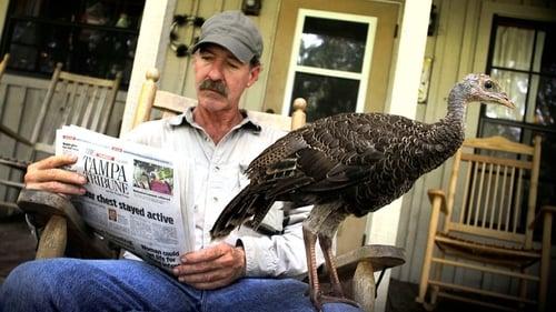 Natural World: 2011-2012 – Épisode My Life as a Turkey
