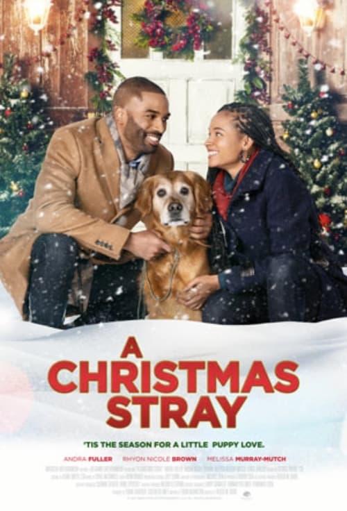 A Christmas Stray