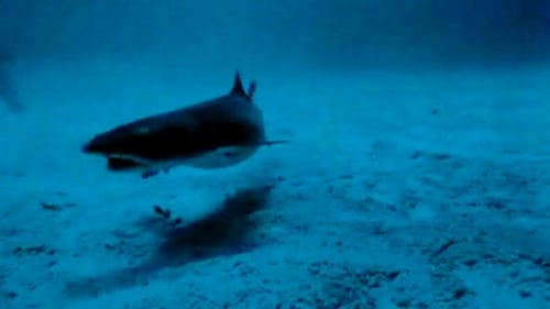 Sharks' Treasure
