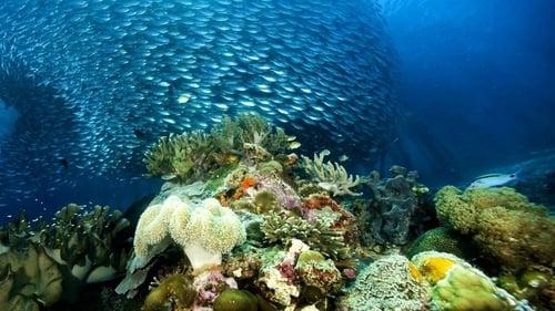 Really Wild Animals: Deep Sea Dive Online