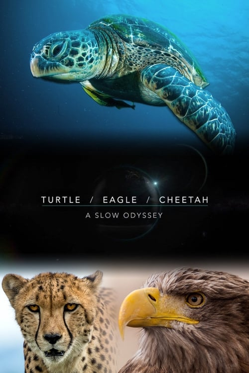Turtle, Eagle, Cheetah: A Slow Odyssey (2018)