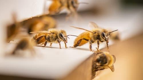 The Great Australian Bee Challenge