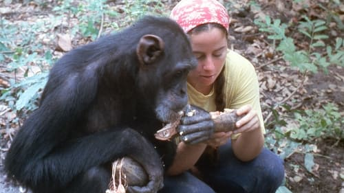 Found there Lucy the Human Chimp