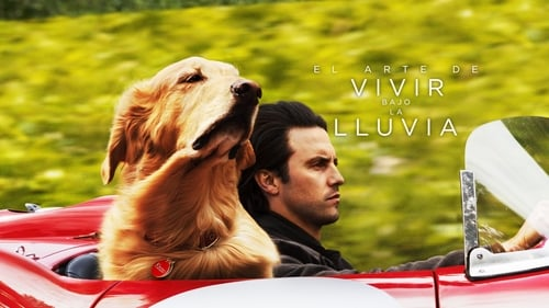 The Art of Racing in the Rain - Meet the dog who will show the world how to be human - Azwaad Movie Database