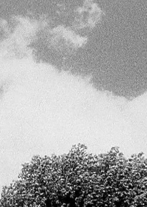 Tree & Cloud (1998)